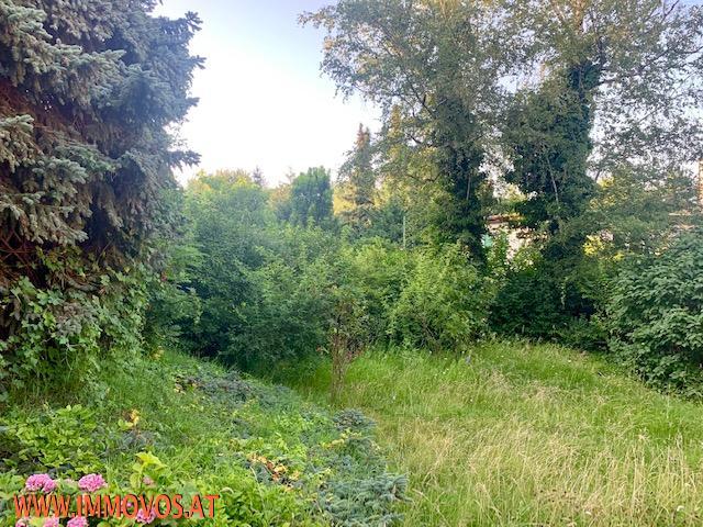 Garten .jpg